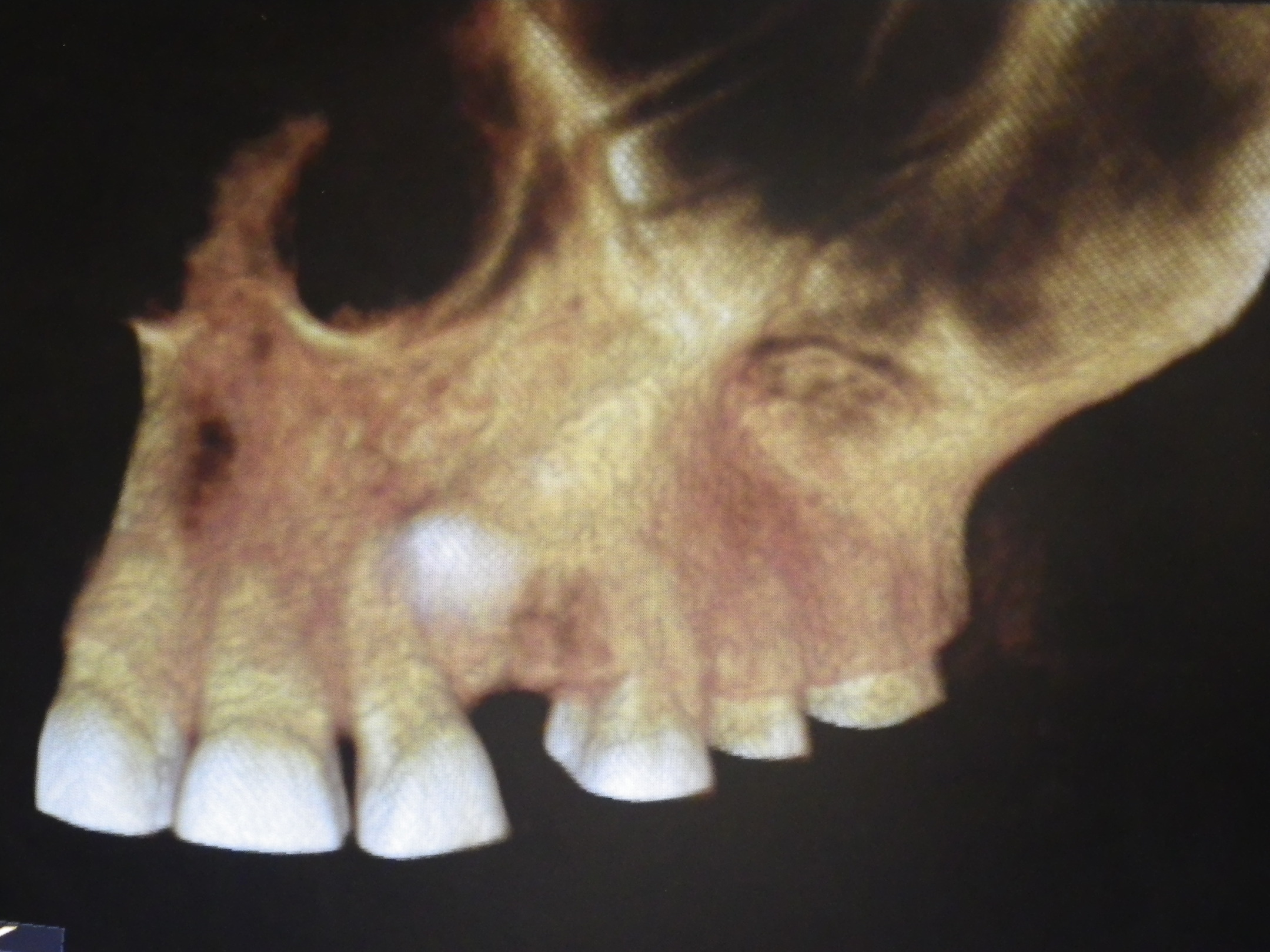 Riordan Orthodontics 187 Technology
